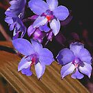 Painted Orchids in Blue by Rosalie Scanlon