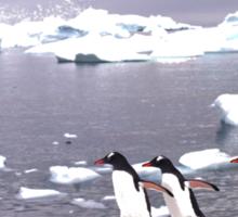 Three Amigos penguin  TSHIRT Sticker
