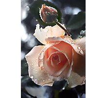 more rain on brandy Photographic Print