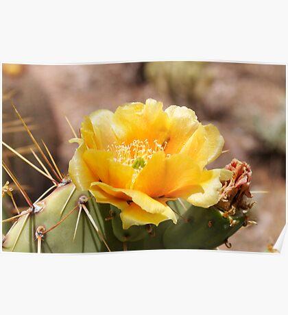 Cactus Flower III Poster