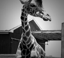 """Hmmm"" Giraffe in BW by ArtistryBySonia"
