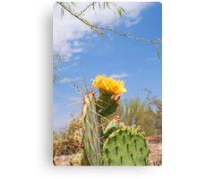 Cactus Flower IV Canvas Print