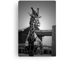 """Really?"", Giraffe in BW Canvas Print"