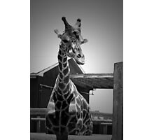 """Really?"", Giraffe in BW Photographic Print"