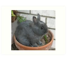 I am a Little Potted Bunny Rabbit Art Print