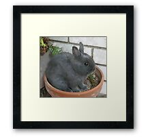 I am a Little Potted Bunny Rabbit Framed Print