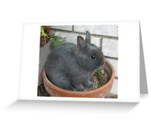 I am a Little Potted Bunny Rabbit Greeting Card