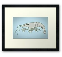 Raw Prawn Framed Print