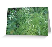 Wild Carrots (I think) Greeting Card