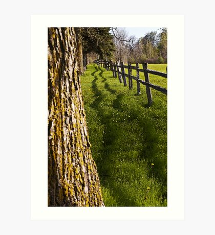fence and shadow Art Print