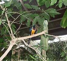 Visually stunning exotic brightly coloured bird. by chuckchuck