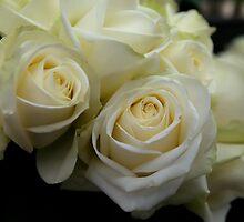 Rose by Melinda Kerr