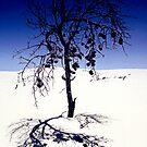 Tree Study by Anthony Davey