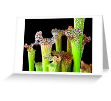 Trumpets at the ready Greeting Card