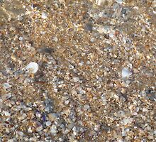 Shells  by Jem81