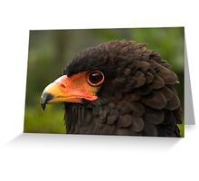 Bateleur Eagle Greeting Card