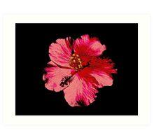 Tropical Pink Hibiscus Flower Art Print