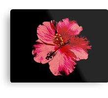 Tropical Pink Hibiscus Flower Metal Print