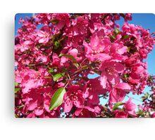 Cherries Jubilee Canvas Print