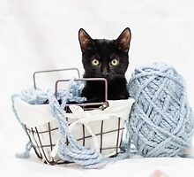 Kitten in Yarn Basket by AndreaBorden