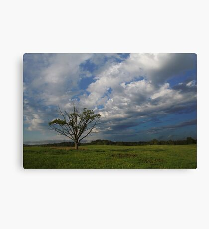 Oak in the spring Canvas Print
