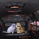 Taylor&Lacey's Limo Ride by Lori Durocher