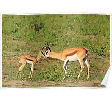 Springbok Love - Proud New Mother Poster