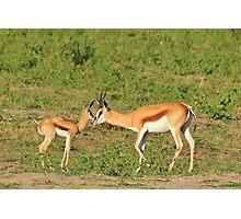Springbok Love - Proud New Mother Photographic Print