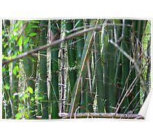 Bamboo (Cuba) Poster