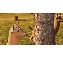 Damaged deer Photographic Print