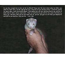 Ferret Love Photographic Print