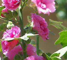 flowers in a breeze by vendetta