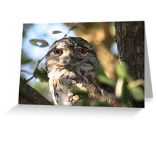 The Tawny Frogmouth Greeting Card
