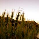 wheat lookin by NIC1D