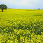 Mellow Yellow by acespace