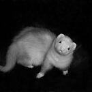 A Ferret Named Bubba by Glenna Walker