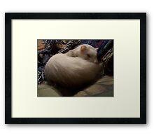 Sweet Dreams Suri Framed Print