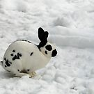 Rabbit in the snow by Arie Koene