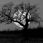 moontree by Philip Young