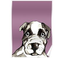 Dog 3 Poster