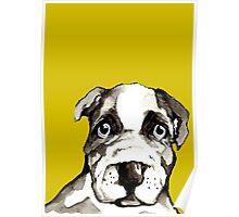 Dog 4 Poster