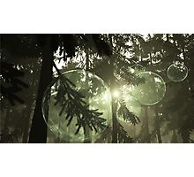 Pine Forest Bubbles Photographic Print