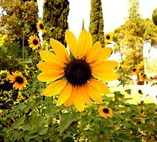 Sunflowers! by KhanasWeb