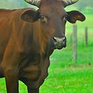 I'll Use these Horns if I have To ! by Penny Smith