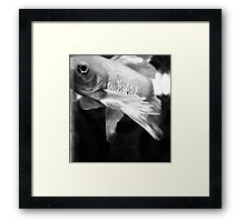 Fish Study Framed Print