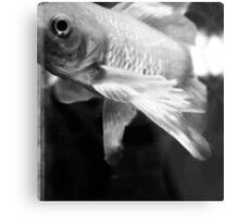 Fish Study Metal Print