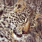Camouflage - Young Leopard by Angela Drysdale