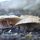 Fungi at school by Jayson Gaskell