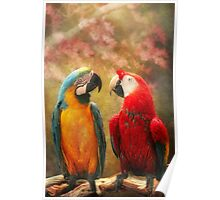 Animal - Parrot - We'll always have parrots Poster