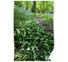 Ramsons and Bluebells Poster